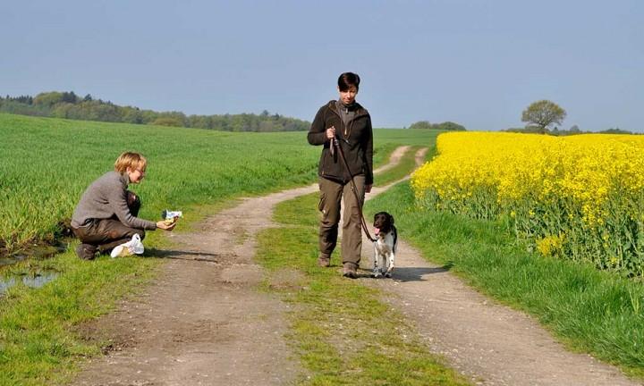Jagdhunde Einzelstunden 2